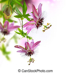 diseño, passiflora, frontera