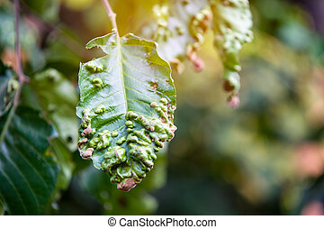 Disease spots on a closeup of a leaf