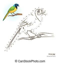 disegnare, ghiandaia, inca, vettore, imparare, uccello