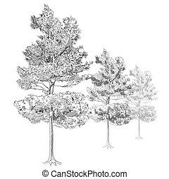 disegnato, -, albero, mano