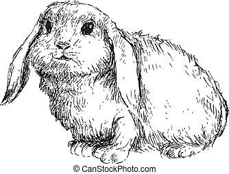 disegnato, coniglio, mano