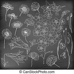 disegnato, fiori, mano