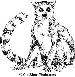 disegnato, lemur, mano