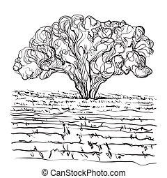 disegnato, mano, illustrazione, vineyard.