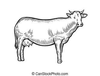 disegnato, mucca, mano animale