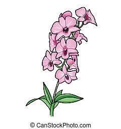 disegnato, orchidea, -, mano