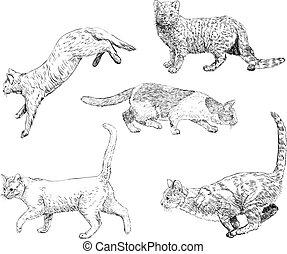 disegnato, set, gatti, mano