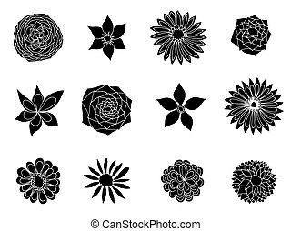 disegni, flowers.