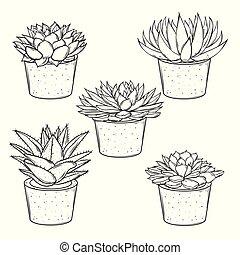 disegni, piante, set, succulents, casa, otri, vettore, fondo, bianco