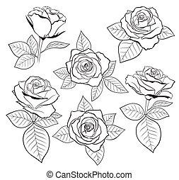 disegni, set, contorno, rosa, foglie, isolato, vettore, dettagliato, germoglio
