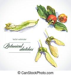 disegni, vettore, botanico