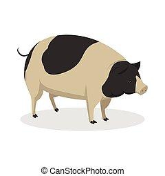 disegno colore, illustrazione, maiale