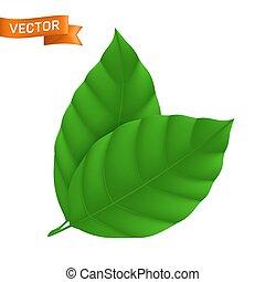 disegno, foglia verde, elemento, lattina, usato, costoluto, due, illustrazione, essere, dettagliato, icona, fondo, web, eco, isolato, bianco, vettore, foglie, o