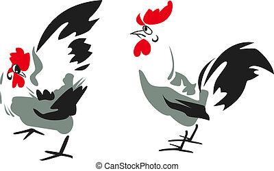 disegno, gallo
