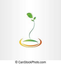 disegno, pianta, vettore, seme, germinazione