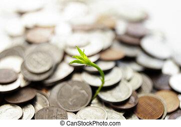 disparar, planta, verde, crescendo, pilha, moeda