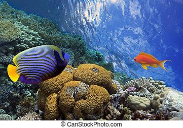 disparar, submarinas, vívido, recife coral, peixes