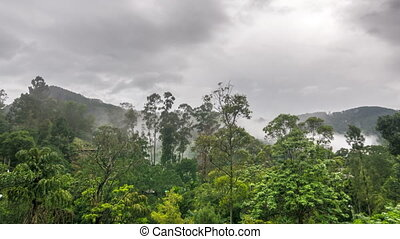 disperses, temps, brouillard, défaillance, rainforest, sur