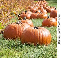 display of large orange pumpkins.