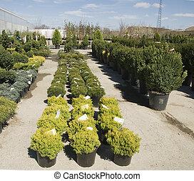 display of plants in a nursery