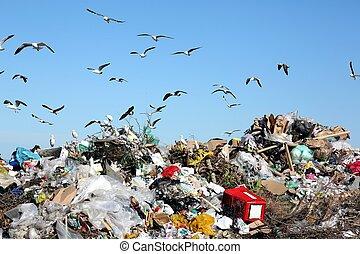 disposição desperdiçada, entulho, e, pássaros