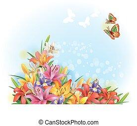 disposizione, di, fiori