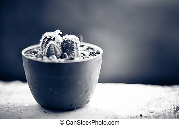 disposto, cactus, terrazzo