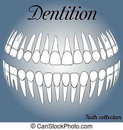 disques, dentaire, 3d