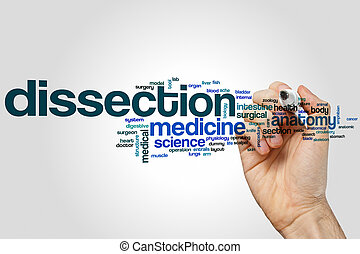 Dissection word cloud