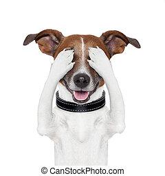 dissimulation, couverture, oeil, chien