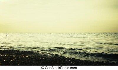 distance, lent, horizon, eau, mer, mouette, mouvement
