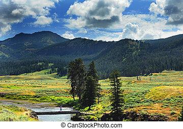Distand Buffalo in Lamar Valley