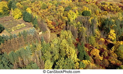 Distant pan-hump aerial shot of a beautiful forest outside the city with colorful autumn trees lit by the bright sun. Good warm place to spend leisure time with family and friends outdoors in nature.