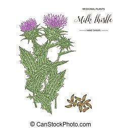 distel, hintergrund., collection., milch, drawn., vektor, freigestellt, hand, pflanze, samen, weisse blumen, abbildung, medizinisch, gerbs, botanical.