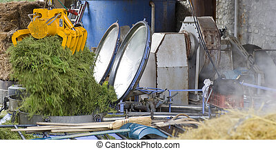 distillerie, herbier, essence