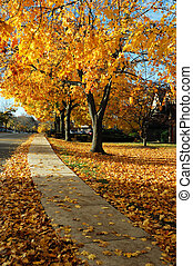 distrito residencial, en, otoño