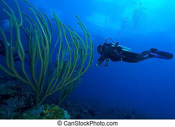 Diver and soft corals, Cayo Largo, Cuba