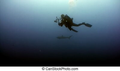 Diver camera operator making a video of the shark in ocean...