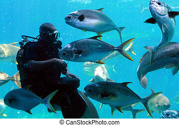 diver feeding fish - a diver in tank in wetsuit feeding ...