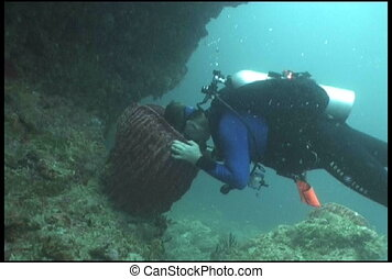 diver funny underwater diving video - underwater diving...