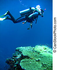 diver in deep and sea coral