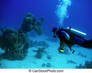 diver in deep - Underwater landscape with diver