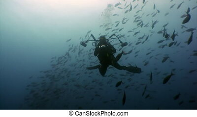 Diver movie camera operator makes a video about school of...