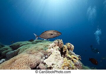 diver, ocean and fish