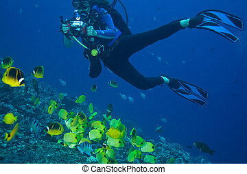 Diver shooting - A diver shooting fish in Kona
