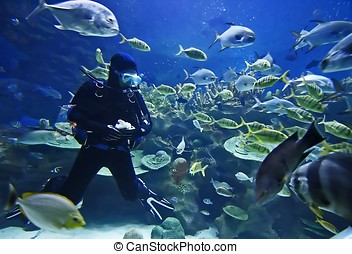 Diver and fishes.