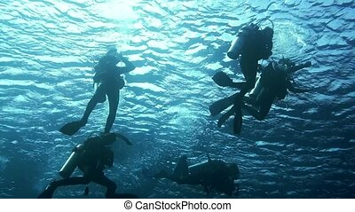 Diver swims at the depth. Red Sea.