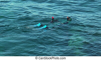 Diver swims in the Mediterranean Sea. A man swims on the surface and looks under the water