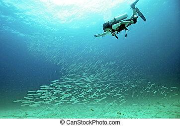 Diver with a camera, take photo the school of fish at the Raya Island, Phuket, Thailand