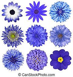 divers, bleu fleurit, sélection, isolé, blanc